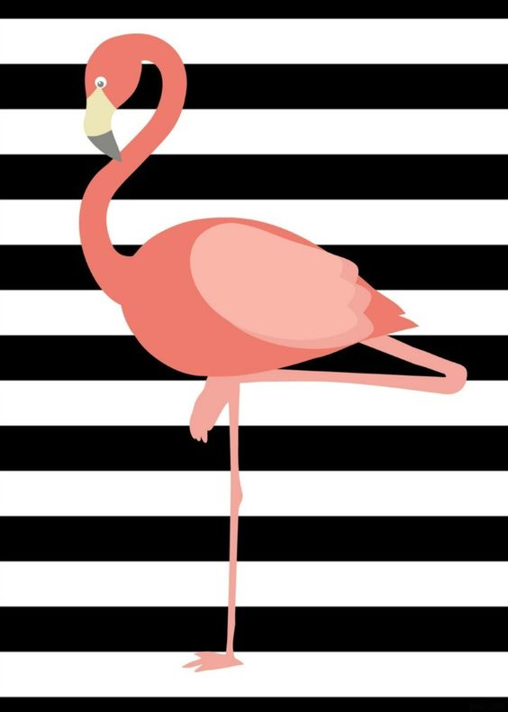 Flamingo 12